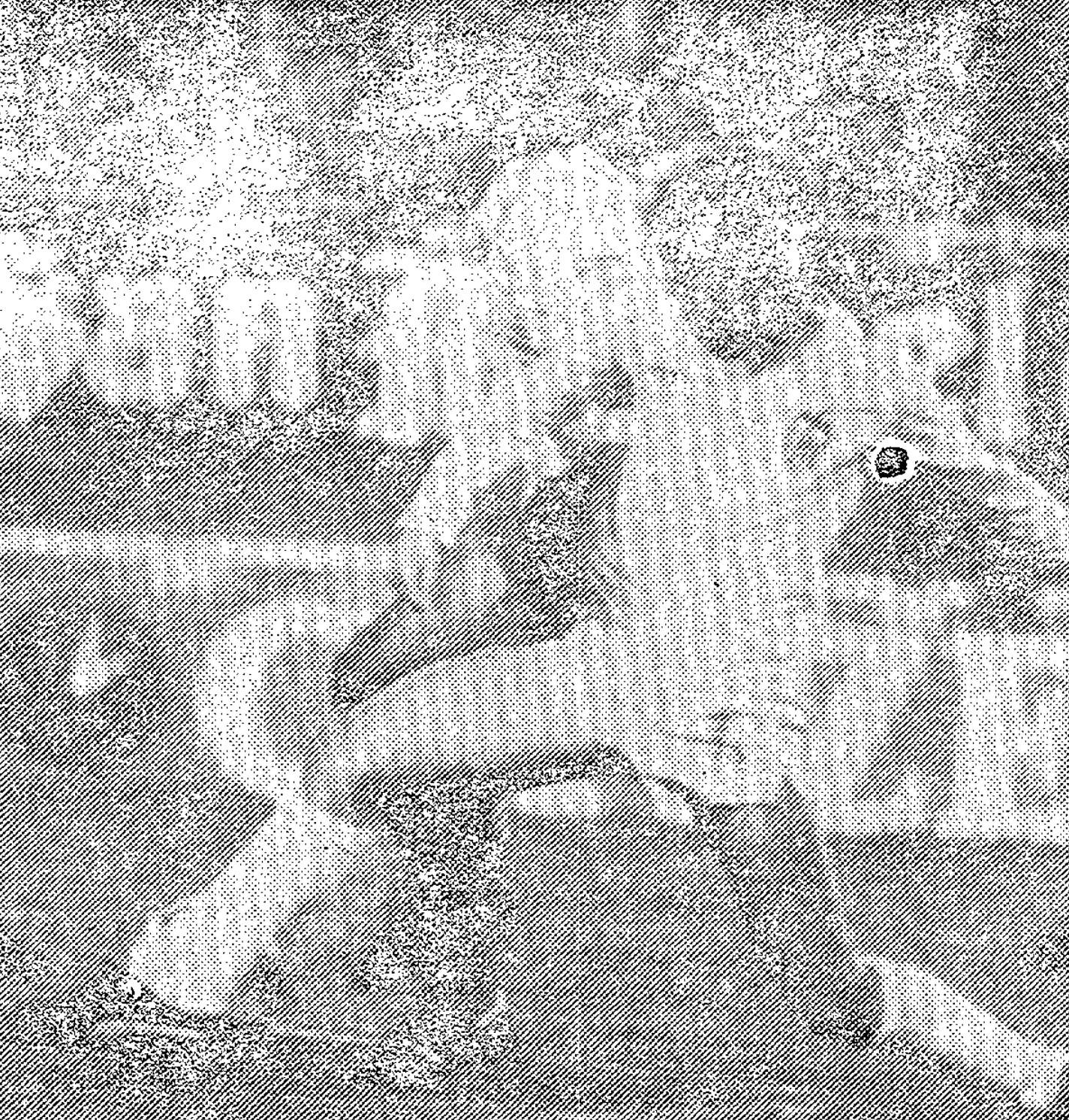 10.11.1982: Málaga CF 3 - 1 Valencia CF